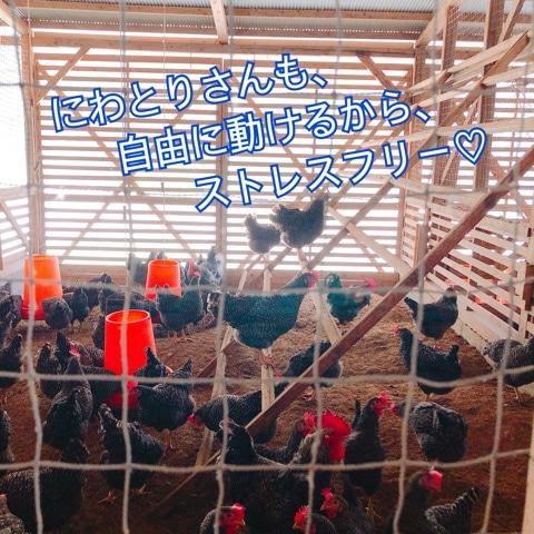 鶏舎の鶏もストレスフリー